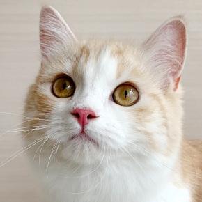 猫カフェMyaoのご紹介