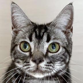 猫のお食事タイム、猫のおやつ