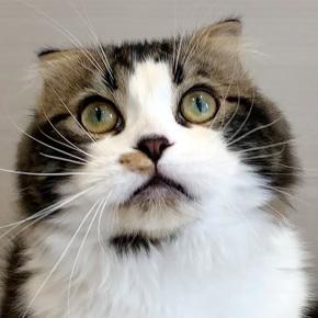 猫ちゃん達のご紹介