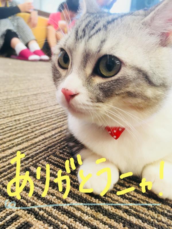 猫カフェMyao~銀くんのお誕生日会~