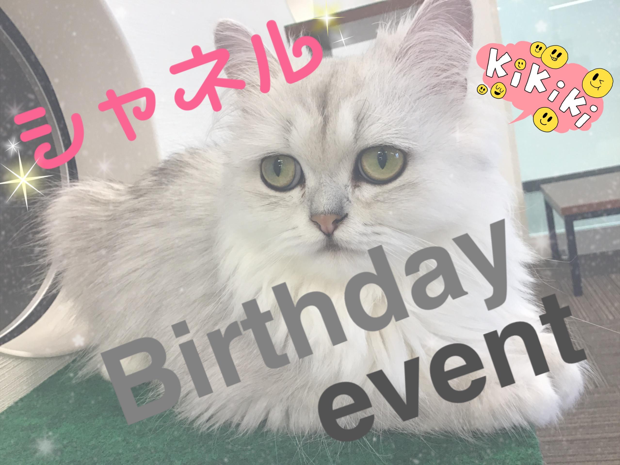 猫カフェMyao~シャネルのお誕生日会~