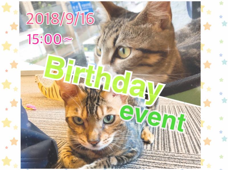 猫カフェMyao~さくら&だいのお誕生日会~